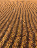 Footsteps on the desert sand — 图库照片