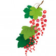 Currant — Stock Vector #27743615