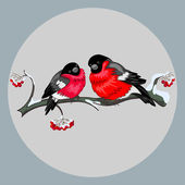 Bullfinches — Vector de stock