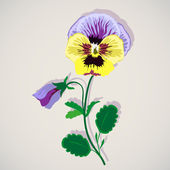 Pansy Flower — Stock Vector
