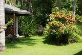 Tropical garden — Stock Photo