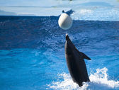 Dolphin playing with white ball in water — Stock Photo