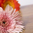 Stock Photo: Beautiful pink and orange gerber daisies on wooden background