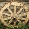 Stock Photo: Old fashioned cart-wheel.