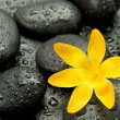Spa stones and yellow flower — Stock Photo #27103741
