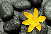 Spa stones and yellow flower — Stock Photo