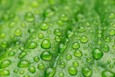Dewdrops on the green leaf — Stock Photo