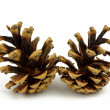 Pine cones isolated on a white background — Stock Photo