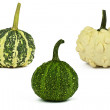 Studio shot of a pumpkins on a white background — Foto Stock