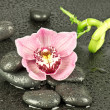 Stock Photo: Zen Stones and Orchid Flower