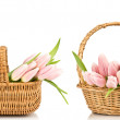 Tulips in a basket — Stock Photo
