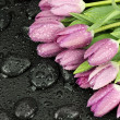 Fresh pink tulips — Stock Photo