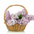 Lilac bouquet in a wattled basket — Stock Photo