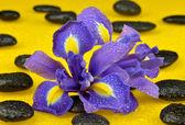Spa stones and iris — Stock Photo