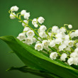 Lily of the valley on green background — Stock Photo