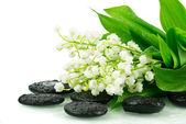 Lily of the valley on spa stones — Stock Photo