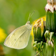 Dandelion and butterfly — Stock Photo #27580197
