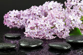 Lilac and spa stones — Stock Photo