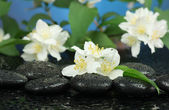 Spa stones and plum flowers — Stock Photo