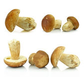 Porcini mushrooms on white background — Stock Photo
