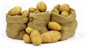 Three Sacks of Potatoes. — Stock Photo