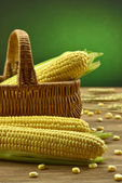Corn on the wooden table — Stock Photo