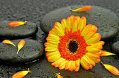 Gerbera with spa stone — Stock Photo