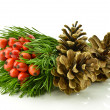 Holly berry and pine cone — Stock Photo