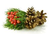 Holly berry en pine cone — Stockfoto