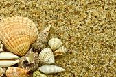 Muscheln auf sand — Stockfoto
