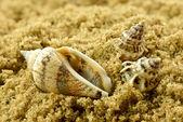 Shells on sand — Stock Photo