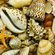 Seashell with starfish on the sand — 图库照片