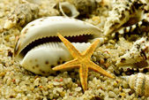 Seashell with starfish on the sand — Stock Photo
