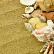 Stock Photo: Shells on sand