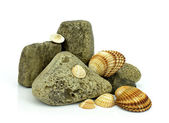Sea shells with stones on a white background — Stock Photo