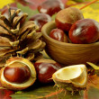 Brown acorns and cone on autumn leaves — Stock Photo