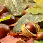 Brown acorns on autumn leaves — Stock Photo