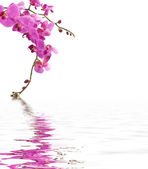 Pink orchids above lake — Stock Photo