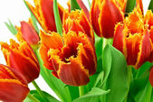 Bouquet of the tulips — Stock Photo