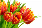 Bouquet of the tulips — Stockfoto