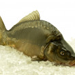 Stock Photo: Carp royal