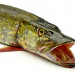 Stock Photo: Pike