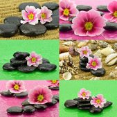 Primroses with stones to spa — Foto de Stock