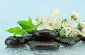 Plum flowers on the stones for spa — Stock Photo