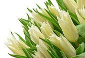 Tulipani — Foto Stock