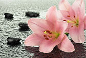 Wet basalt stones with pink lilies — Stock Photo