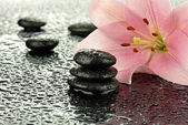 Wet basalt stones with pink lily — Стоковое фото