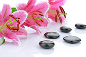 Basalt stones with pink lilies — Стоковое фото
