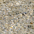 Sand and shells background — Stock Photo #30440619