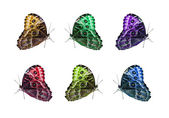 Butterfly isolated collage — Stock Photo